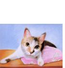 パステル色鉛筆肖像画リアル